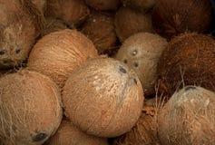 torr kokosnöt Arkivfoton