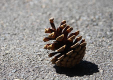 Torr kotte för singelbrunt som lägger på golvet av gatan Royaltyfri Fotografi