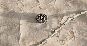 Torr kotte och filial på sanden arkivfilmer