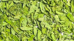 Torr läka grön bakgrund för mintkaramellsidor Krydda pepparmint royaltyfria foton