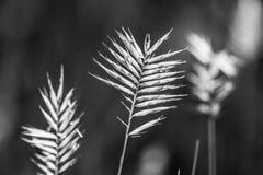 Torr lövverk i svartvitt Arkivfoton