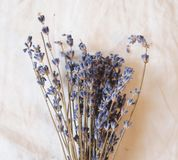 torr lavendel Royaltyfria Foton