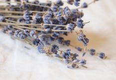 torr lavendel Arkivfoto