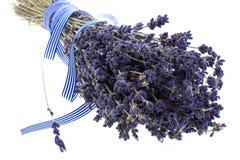 torr lavendel för grupp Royaltyfri Fotografi