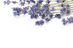Torr lavendel som isoleras på en vit bakgrund arkivbilder