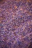 Torr lavendelhög Royaltyfria Foton