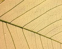 torr leaf Arkivbilder