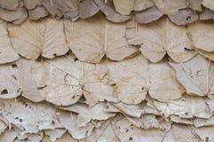 Torr leaf Royaltyfri Fotografi