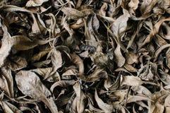 Torr leaf Royaltyfri Bild