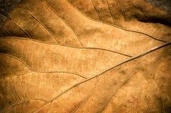 Torr leaf Royaltyfria Bilder