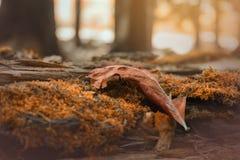 Torr leaf Arkivfoto