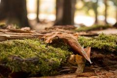 Torr leaf Royaltyfria Foton