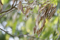 Torr leaf arkivbild