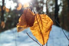 Torr leaf Arkivfoton