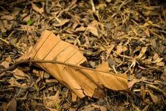 torr leaf för bakgrund Royaltyfri Fotografi
