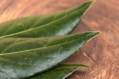 torr leaf för fjärd Fotografering för Bildbyråer