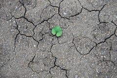 Torr lera och nyfött grönt blad Royaltyfria Bilder