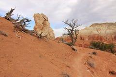 torr liggande för canyonland royaltyfri bild