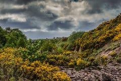Torr liten vik under att hota mörka himlar i Dunbeath, Skottland Arkivbild