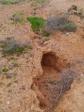 Torr liten viksäng nära La Oliva på Fuerteventura Royaltyfri Fotografi