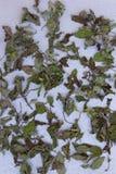 Torr mintkaramell eller pepparmint på en neutral grå bakgrund Top beskådar Arkivbild