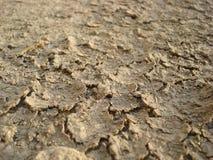 torr mud Royaltyfri Foto
