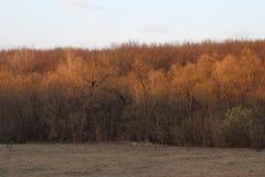 Torr orange skog Arkivfoton