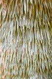 Torr palmbladbakgrund royaltyfria foton