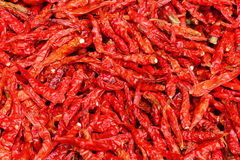 torr pepparred för chili Fotografering för Bildbyråer