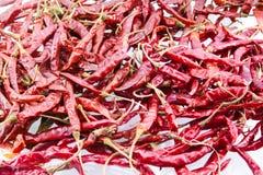 Torr röd chili på vit bakgrund Arkivfoton