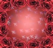 torr röd rosram på suddighetsflygplanbokeh Royaltyfri Bild