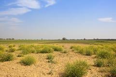 Torr rajasthan jordbruksmark Arkivbild