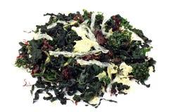 Torr seaweed royaltyfri foto