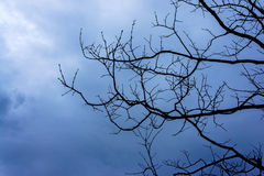 torr silhouettetree Arkivbilder