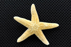 torr sjöstjärna Royaltyfri Fotografi