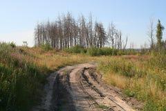 torr skog Royaltyfria Bilder