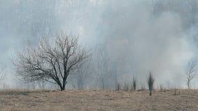 Torr skog i röken arkivfilmer