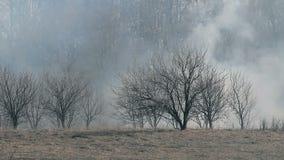Torr skog i röken stock video