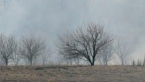 Torr skog i röken lager videofilmer