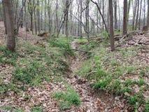 Torr ström i skog eller trän med träd och växter royaltyfria bilder