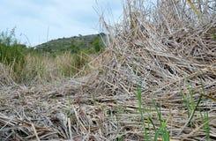 torr swamp för dag Arkivbilder