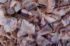 Torr tioarmad bläckfiskmatfrysning arkivbild
