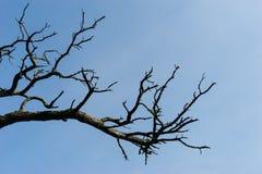 Torr trädfilial för abstrakt begrepp Fotografering för Bildbyråer