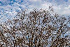 Torr tr?dtimmer mot bl? himmel och vita moln royaltyfri fotografi