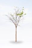 torr tree Arkivbilder