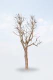 torr tree Royaltyfri Fotografi