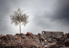 torr tree Royaltyfria Bilder