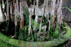 torr tree Arkivbild