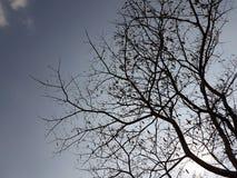 torr tree Arkivfoto