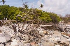 torr tree fotografering för bildbyråer